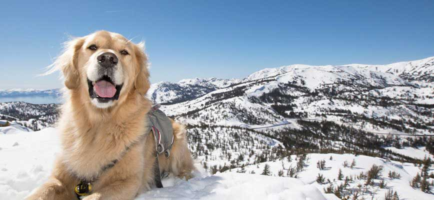 mammoth pet friendly hotels