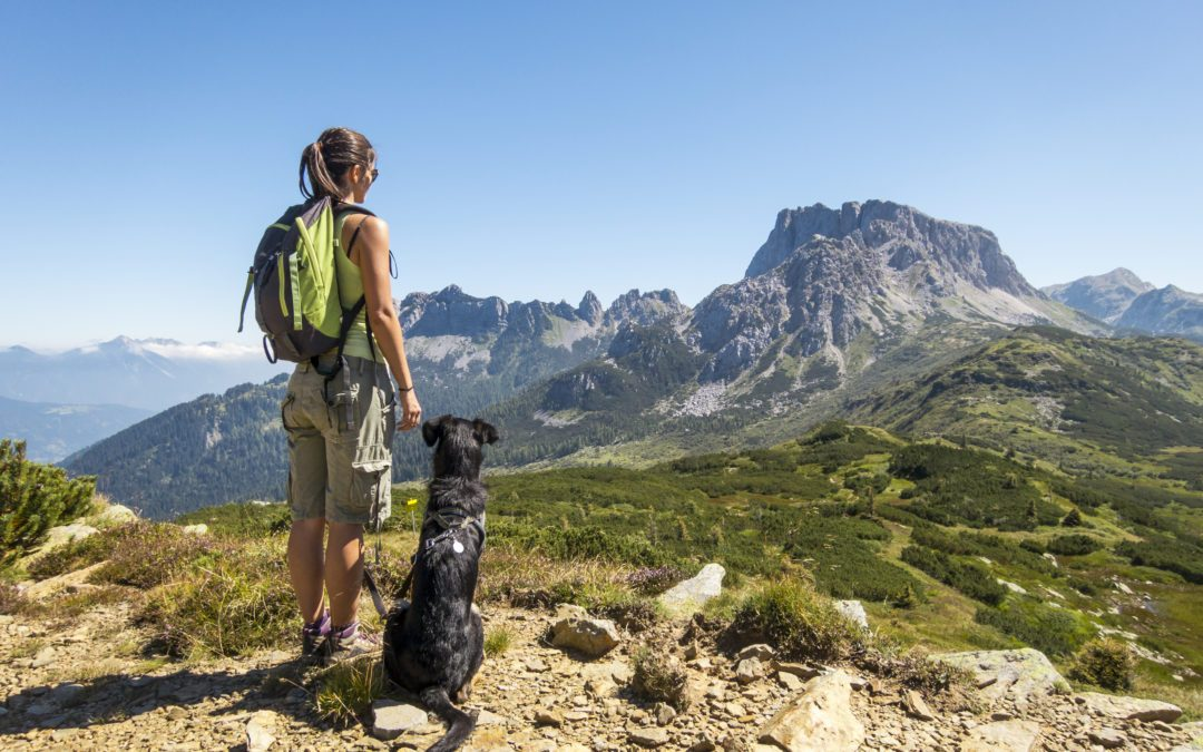 hike with your dog in mammoth