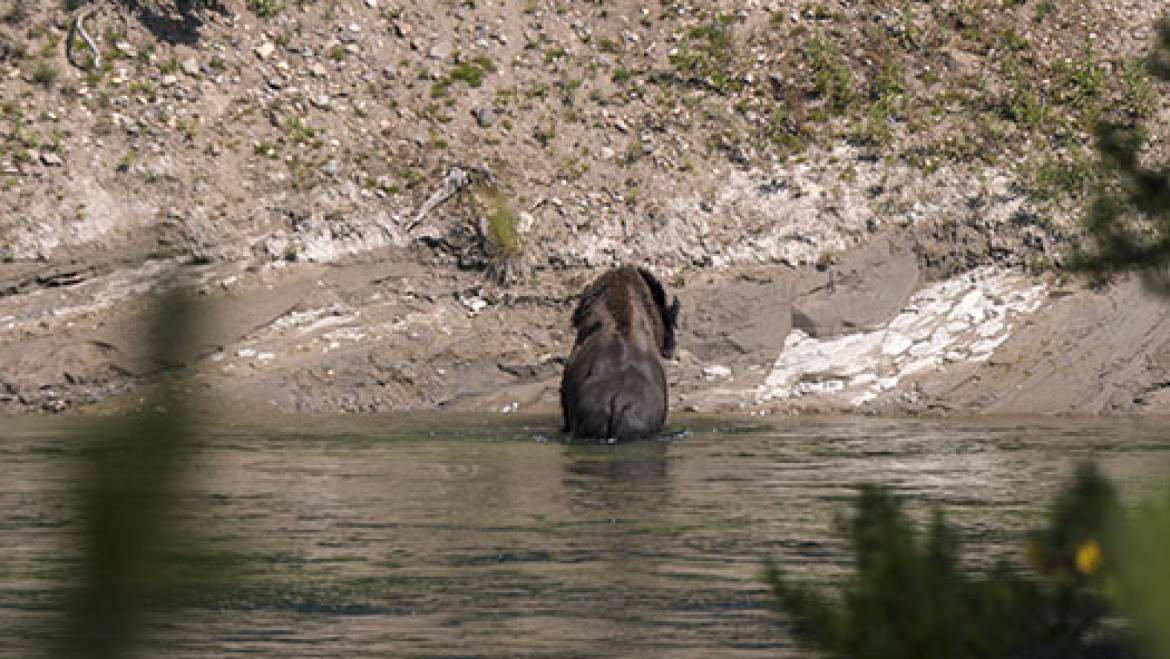 What You Need to Know About Bear Safety in Mammoth Lake in Mammoth Lakes, CA