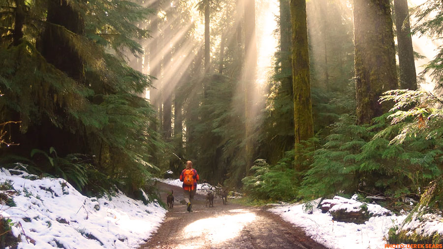 person trail running in the forest with dogs